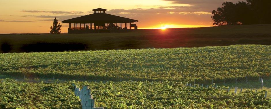 bodegas-carrau-uruguay-wijn-en-thijs
